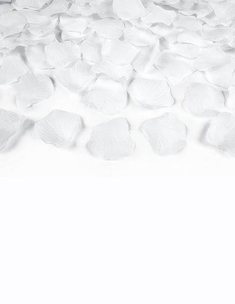 100 pétalos blancos para boda